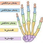 جراحی دست چیست؟